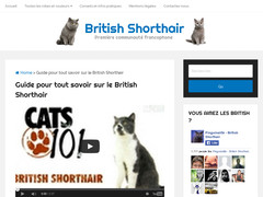 Guide sur les British Shorthair